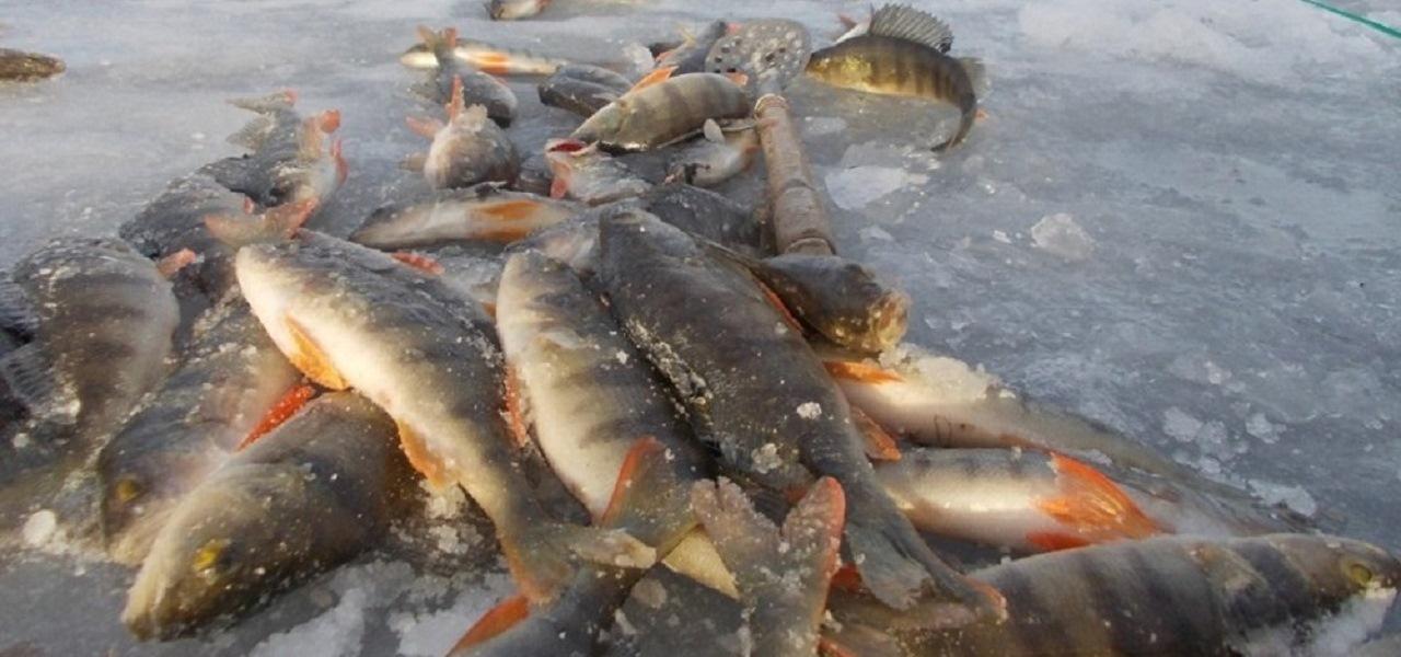 Зимняя трофейная рыбалка в ХМАО