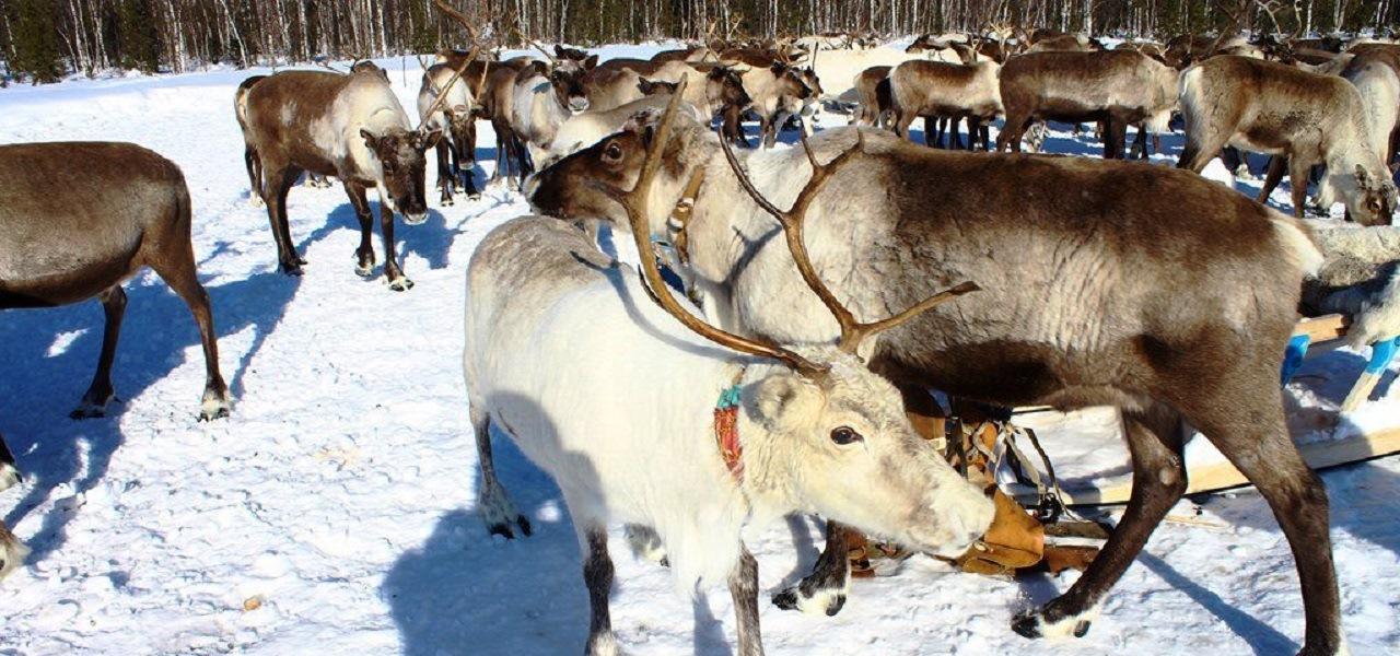 Медвежий праздник Ханты – хранителей культа медведя