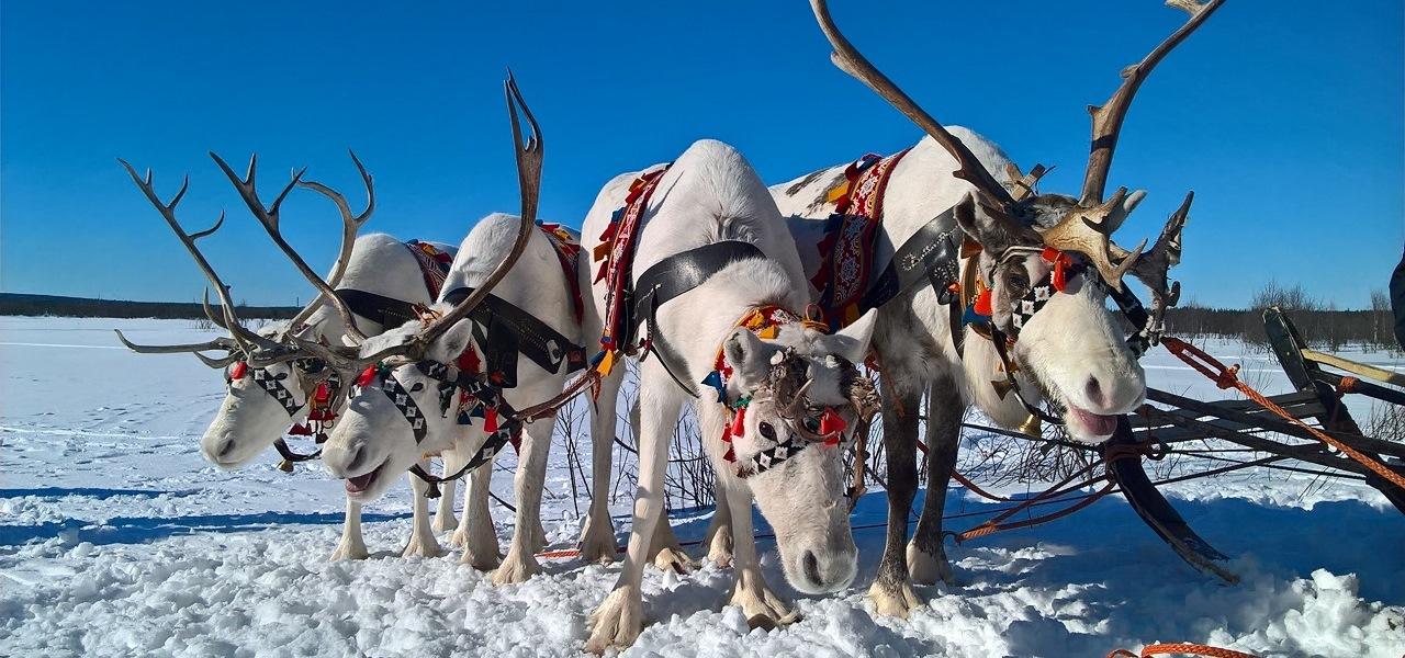 Заполярное Рождество в Мурманске